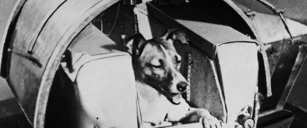 Le martyre des chiens cosmonautes