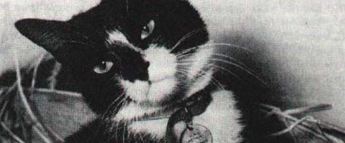 Oscar, le chat insubmersible